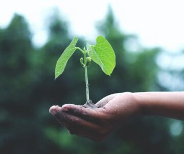person holding a green plant 1072824 1 1